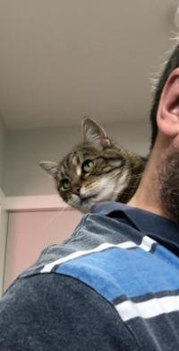 Cat-on-shoulders
